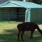 Portable Livestock Shed, 12 X 12 X 8, Animal Run In