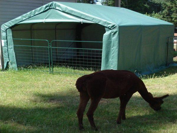 Portable Livestock Shed, 12 X 12 X 8, Animal Run In