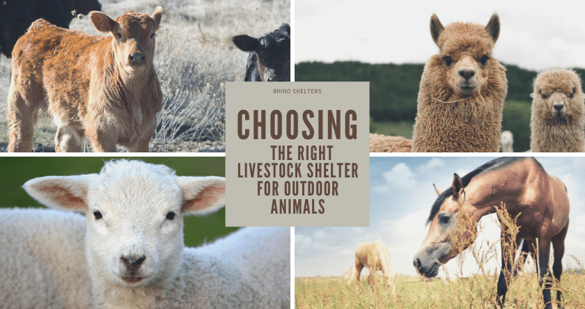 How to Choose a Livestock Shelter for Your Outdoor Animals